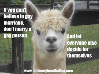 alpaca gay